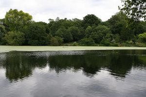 Hampstead Ponds - picture by Eisenbergalex