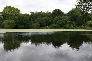 Hampstead Ponds - picture by Eisenbergalex